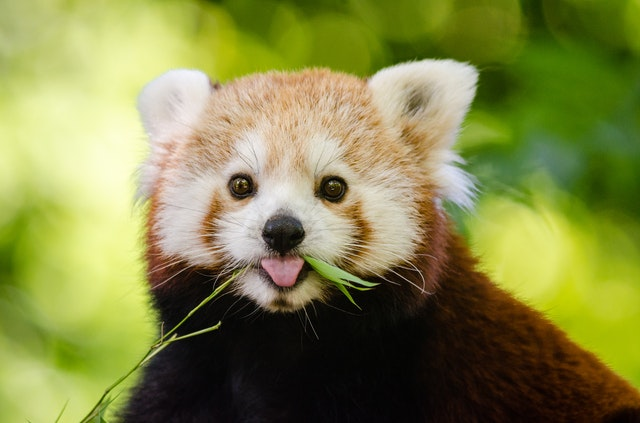 5 Cutest Animals In The World